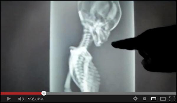 Esqueleto de alienígena examinado por raio-X