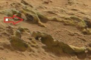 Marte 7