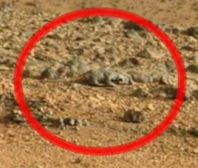 UFO, UFOs, sighting, sightings, alien, aliens, space, Mars, rodent, lizard, rabbit, anomoly, anomolies, photo, esa, soho, W56, life, news, world, CNN, CNBC, politics, -s