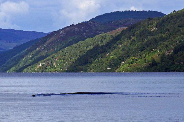 Castor, lontra, ou a legendária criatura do Lago Ness?