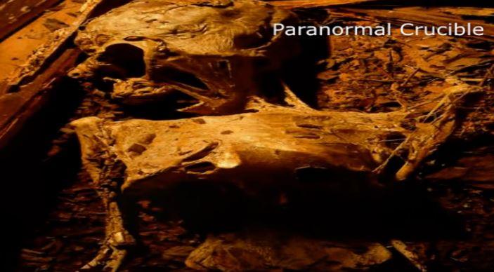 possíveis corpos mumificados de ETs