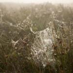 Está chovendo aranhas na Austrália e um estudioso de OVNIs está empolgado com o fato