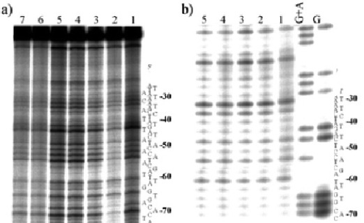 DNA telepático