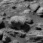 Um mamífero em Marte?