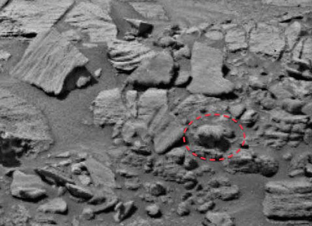 Urso em Marte 2