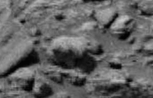 Urso em Marte