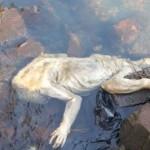 Estranha criatura é encontrada no Paraguai
