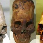 Crânios alongados podem ter servido como uma vantagem para a sobrevivência