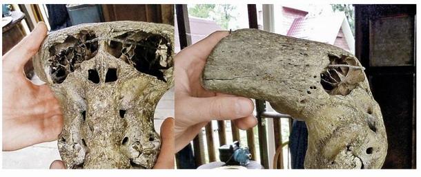 crânios anômalos encontrados na Rússia