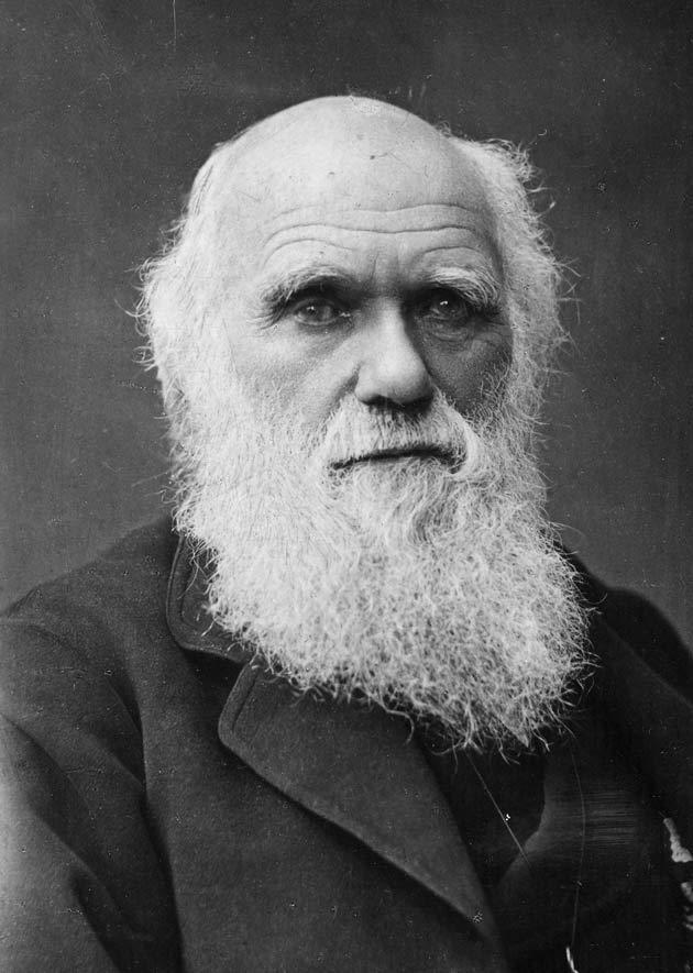 Resultado de imagem para darwin
