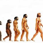 Até 2050 Homo sapiens pode evoluir para Homo optimus