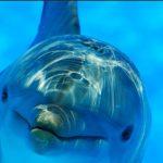 Golfinhos podem ser a chave para a comunicação com ETs