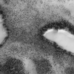 Teria alguém encontrado lagos com margens arborizadas em Marte