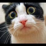 Exclusivo: Gato é abduzido por OVNI!