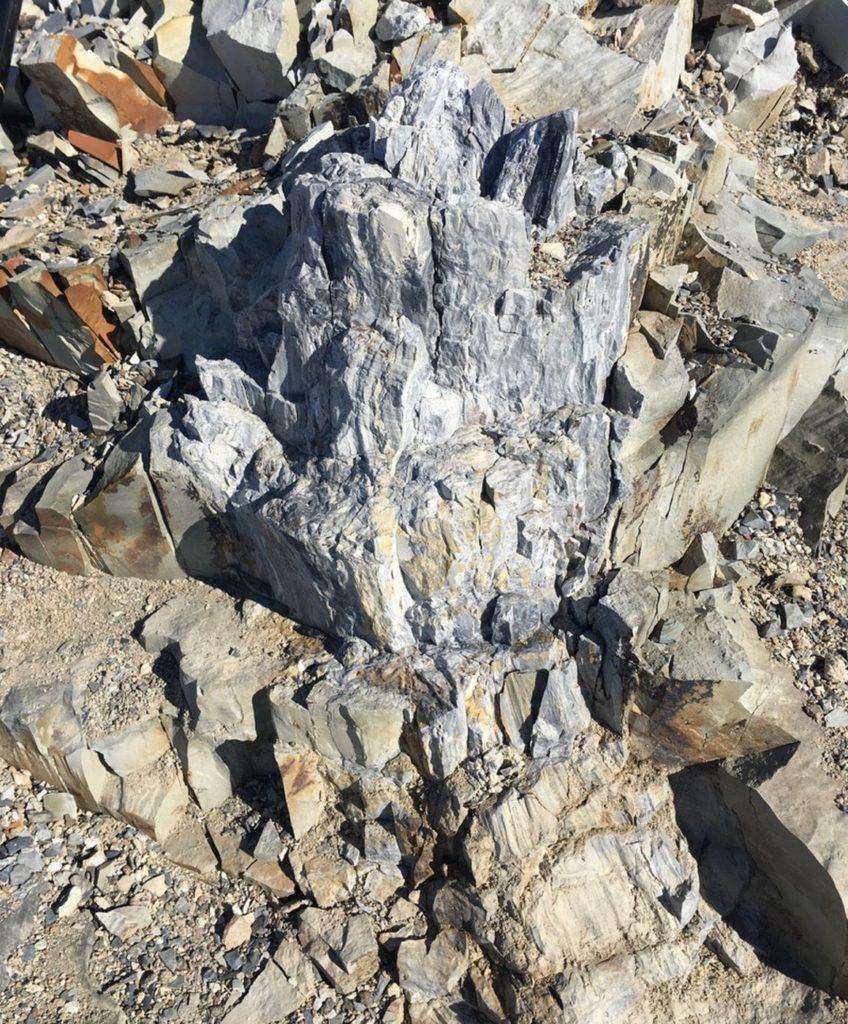 Fóssil de árvore na Antártica