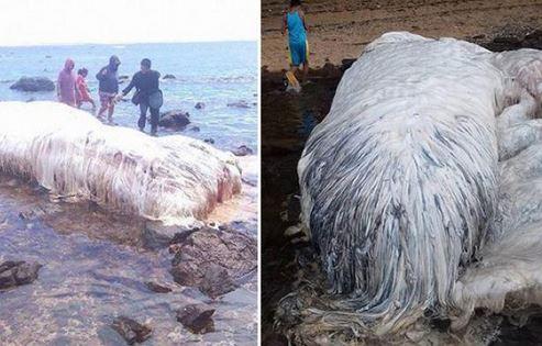 criatura peluda aparece em praia