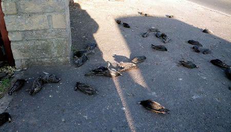 Pássaros também caíram do céu em Roma